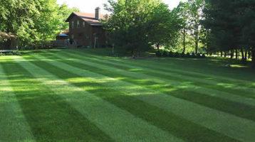 Lawn Maintenance